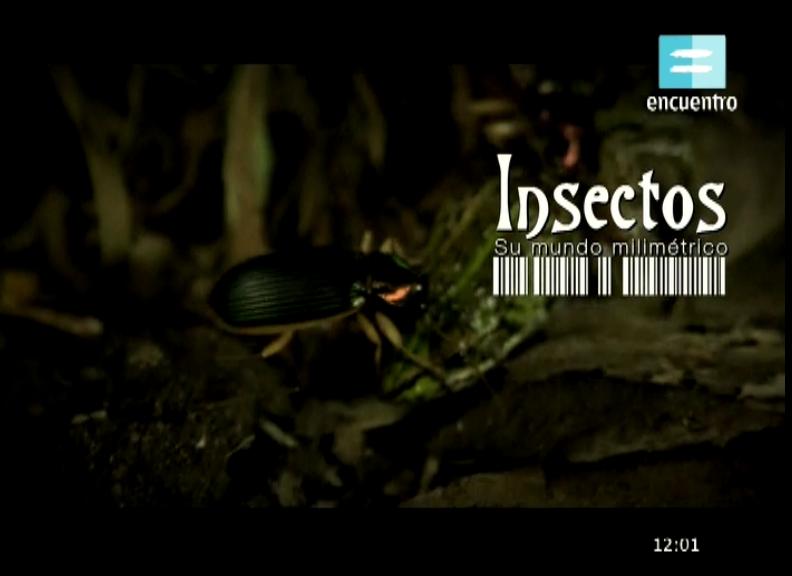 Insectos: Su mundo milimétrico