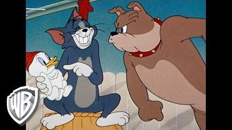 Tom y Jerry en Español Compilación clásica de dibujos animados Tom, Jerry y Spike