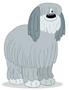 Niblet the sheepdog
