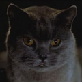 Smokey Chief Cat