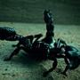 Escorpion Orphan Black