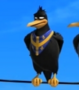 Cuervo2