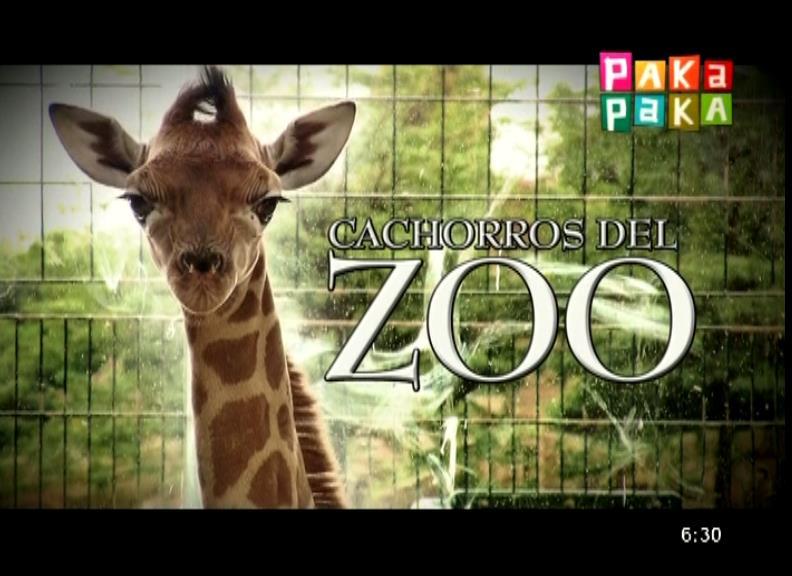 Cachorros del zoo