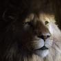 Aslan-Narnia3