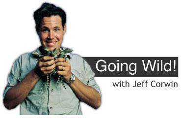 Las aventuras de Jeff Corwin