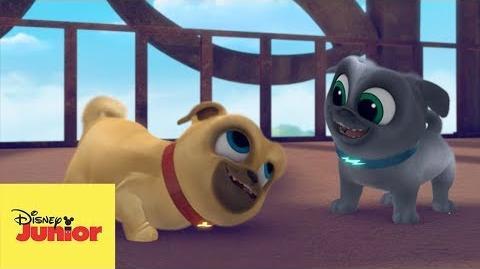 Dos Cachorros Traviesos I Puppy Dog Pals