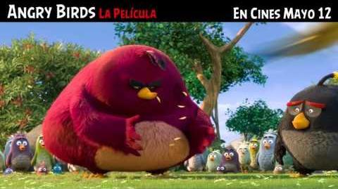 ANGRY BIRDS La Película (FLOCK TV SPOT) doblado a español