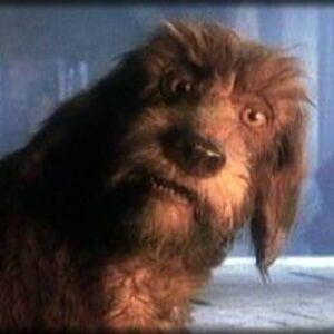 Cacee763a369e68ae0a07a72786f28e8--the-storyteller-dog.jpg