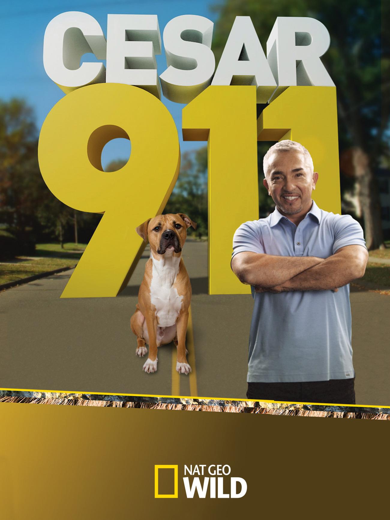 César 911