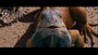 Iguana Chico