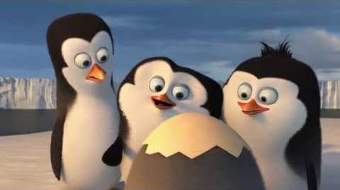 """Los Pingüinos de Madagascar - """"Conociendo a los Pingüinos"""" en Español (HD) Próximamente en Cines"""