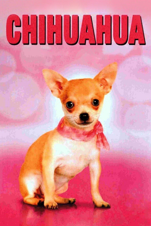 Chihuahua: La película