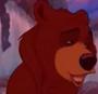 Male Lover Bear