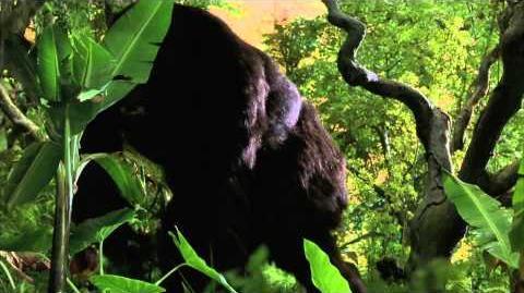 Joe el gran gorilla - Trailer