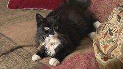 Cat small worlds.jpg