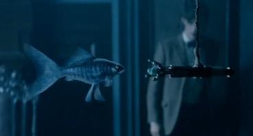 Himmelsfische