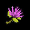 Kaliptus Flower