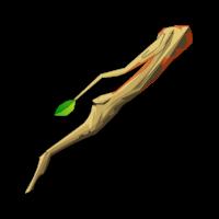Light Treeckler Branch