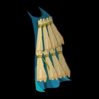 Akwadala Cloak