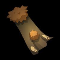 Bearman's Cloak