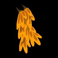 Fire Kwape