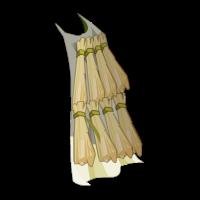 Aerdala Cloak