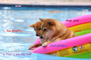 DOGE In Pool
