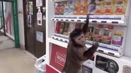 Monkey buys juice-2
