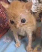 Dinky Cat