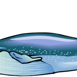 Blue Henry Whale