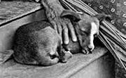 Hawaiian dog, 19th century.png