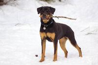 03 Snow Bunny Talitha Rottweiler
