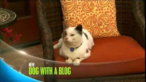 Dog_With_a_Blog_-_Cat_With_A_Blog_-_Promo