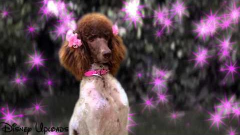 Clip_-_Stan_Falls_in_Love_-_Dog_With_a_Blog