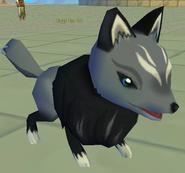 Foggy Fox III