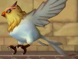 Female Bird of Paradise