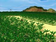 DKC TV Series S1 Banana Plantation 1