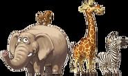 Island Animals