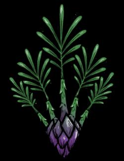 Asparagus Fern.png
