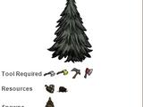 Árvore (Tree)