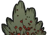 Arbusto de bayas
