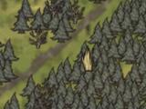 Florestas (Forest)