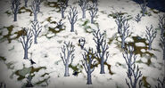 Bosque de abedul 005