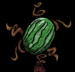 Watermelon Plant.png