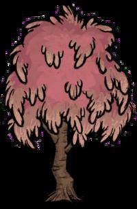 Sugarwood Tree