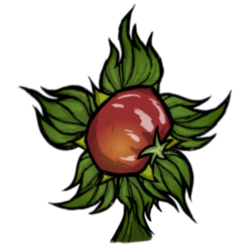 Toma Root Plant.png