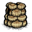 Seashell Suit