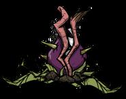 Snaptooth Flytrap Sleeping