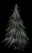 176px-Evergreen