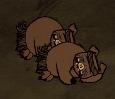 Guardian Pigs sleeping